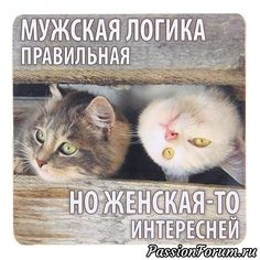 Ideas For Humor Bilder Lustig Funny Animal Pictures, Funny Animals, Funny Shit, Russian Humor, Clever Quotes, Pregnancy Humor, Funny Quotes About Life, Parenting Humor, Smile Quotes