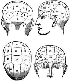 Phrenology heads