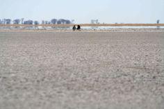 Kalahari salt pans Places To Visit, Salt, Camping, Beach, Water, Travel, Outdoor, Campsite, Gripe Water