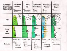 San Pedro cactus IDing chart This world is really awesome. The woman who make our chocolate think you're awesome, too. Please consider ordering some Peruvian Chocolate today! Fast shipping! http://www.amazon.com/gp/product/B00725K254