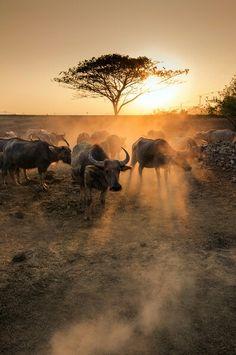 Sunset and buffalo  #Buffalo #nationalpark https://plus.google.com/+alpaciro27
