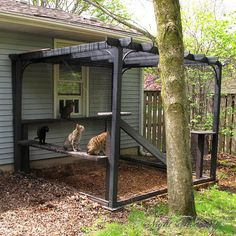 With half a dozen mutinous cats, we had often entertained the idea of building a cat enclosure. We wanted our cats to be able to enjoy nature, roll in the dirt, and bask in the sun without risking their safety. What wasn't appealing were the images that c Diy Cat Enclosure, Outdoor Cat Enclosure, Reptile Enclosure, Pergola Diy, Pergola Ideas, Pergola Roof, Cat Run, Cat Playground, Outdoor Cats