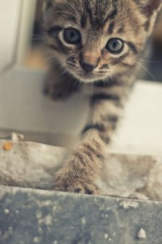 Curious kitty - Your Fun Pics