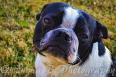 Emma B Photography - Pet Photography