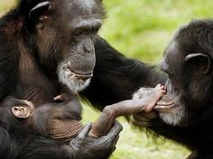 Release the Rockville 15 to a chimpanzee sanctuary! Sign the petition today!!! I did!