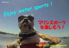 夏が近付くとじっとしていられない!  timein.jp  http://www.timein.jp/item/show/980197416