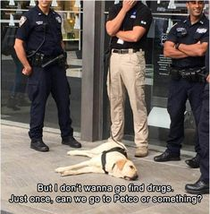 But I dont wanna go find drugs. Just once, can we go to Petco or something?