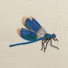 Henry Handwork Broder des libellules c'est bien, les empêcher de disparaître c'est mieux