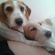 Adozione cani - Coppia Cani Da Caccia Maschio E Femmina Sterilizzati #adozionecani