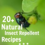 """Homemade natural repellants    Poop. It's a fact of life on a homestead. And poop brings flies. Lots of 'em. Back in the days before I got all crunchy, I used to use loads of chemical fly sprays on my horses… And even though I hadn't fully """"awakened"""" to the world of chemical-free living at that point, I remember it would still bother me when I could taste the fly spray in my mouth after dousing the horses… I've seen questions about natural insect repellents buzzing all ..."""