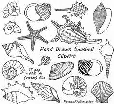 Hand getrokken Seashell Clipart Shell illustraties digitale