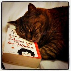 Cat and Book.....enough said ('Agnes and the Hitman' by Jennifer Crusie)