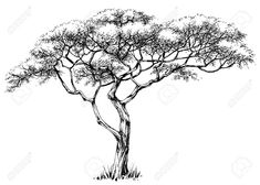 Find African Tree Marula Tree stock images in HD and millions of other royalty-free stock photos, illustrations and vectors in the Shutterstock collection. Tree Drawings Pencil, Animal Drawings, Tree Illustration, Illustrations, Realistic Drawings, Cool Drawings, Africa Drawing, Palm Tree Drawing, Pencil Drawings