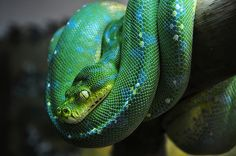 23 Fantastic and Colourful Photographs of Snakes