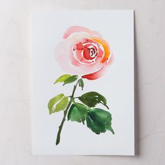 """Stop and """"paint"""" the roses! I'm painting a new flower everyday this month on @creativebug, and today's flower is the classic rose. We are…"""