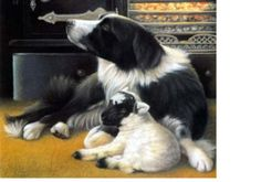 Border Collie Dog and Baby Lamb Notecard s Protection Friends Lamb and Collie Cards