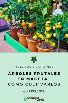 Potted fruit trees: how to grow them Eco Garden, Vegetable Garden Design, Garden Plants, Potted Fruit Trees, Plantation, Green Life, Plant Decor, Horticulture, Garden Projects