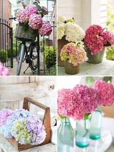Hydranga, they come in many colors and the trees are sturdy and strong.  These trees are a great place for bird houses,feeders, or wind chimes.  :) Hydrangea Colors, Hydrangeas, Diy Wedding, Wedding Bells, Dream Wedding, Wedding Flowers, Spring Flowers, Beautiful Flowers, Beautiful Gardens