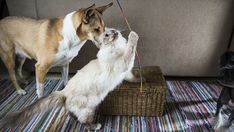 #¿Gatos o perros? Científicos determinan quién de los dos es más inteligente - RT en Español - Noticias internacionales: RT en Español -…