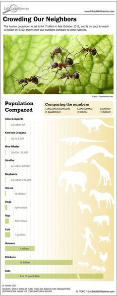 The Human population is set to hit 7 billion in late October 2011, and is on pace to reach 10 billion by 2100. Here's how our numbers compare to other species   Infographic Designer Ross Toro.