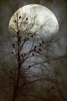 The Flock finds their favorite perch for the night by the light of the Full Moon!