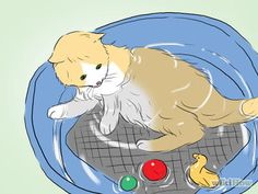 Bathe a Cat Step by step. If it ever comes down to it and you must bathe your cat. or if they like it for some reason. Bane, Cat Steps, Little Critter, Dog Care, Cat Life, Kitten, Kitty Cats, Habitats, Make It Yourself