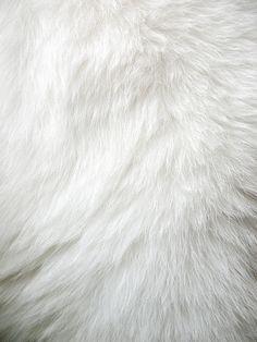 pale   fur