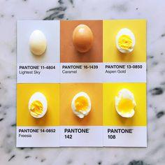 pantone food colors eggs by Lucy Litman Pantone Swatches, Color Swatches, Colour Pallete, Color Schemes, Color Palettes, Paleta Pantone, Perfect Eggs, Pantone Color, Yellow Pantone