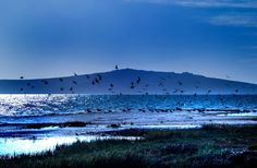Birds in the late afternoon by Nauta Piscatorque on YouPic West Coast, Birds, Mountains, Landscape, Nature, Travel, Naturaleza, Viajes, Scenery