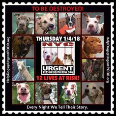 TO BE DESTROYED 01/04/18 - - Info    https://newhope.shelterbuddy.com/Animal/List  To rescue a Death Row Dog, Please read this:http://information.urgentpodr.org/adoption-info-and-list-of-rescues/ List of NH Rescues:http://www.nycacc.org/get-involved/new-hope/nhpartners To view the full album, please click ...-  Click for info & Current Status: http://nycdogs.urgentpodr.org/to-be-destroyed-4915/