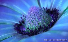 Windflower (2012)-digital blasphemy