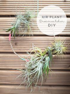 Air Plant Dreamcatcher DIY – via sodapop-design.de