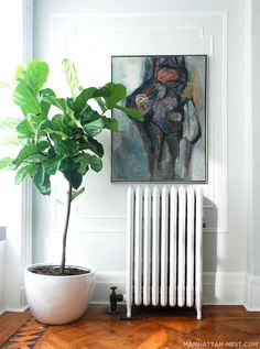 fiddle leaf fig tree- my favorite plant for it's scale and silliness of shape.... could be awesome in the corner window spot perched on the HVAC (tall enough to not block view, but great organic-ness against the linear cityscape...)