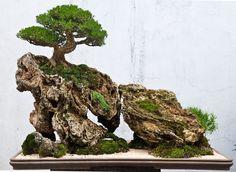 Bonsai » Landscape