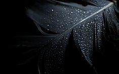 nice Black HD wallpapers with multiple themes (1578) Check more at http://www.finewallpapers.eu/pin/22210/