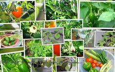 "Veggies at ""Fresh from my Garden"""