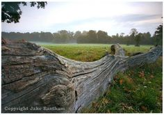 A fallen tree trunk in Dinton Park by the photographer Jake Eastham who lives near Salisbury. Fallen Tree, Museum Art Gallery, Salisbury, Autumn Trees, Country Life, How To Find Out, Landscape, Park, Creative