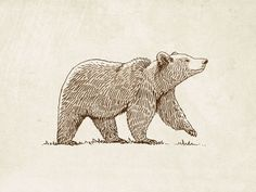 Illustration ours grizzly - Illustration Inspiration, Bear Illustration, Botanical Illustration, Grizzly Bear Drawing, Grizzly Bear Tattoos, Ours Grizzly, Art D'ours, Kunst Portfolio, Bear Sketch