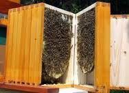 A LO NATURAL Y SENCILLO: Insectos que ayudan a reducir el consumo de pestic...