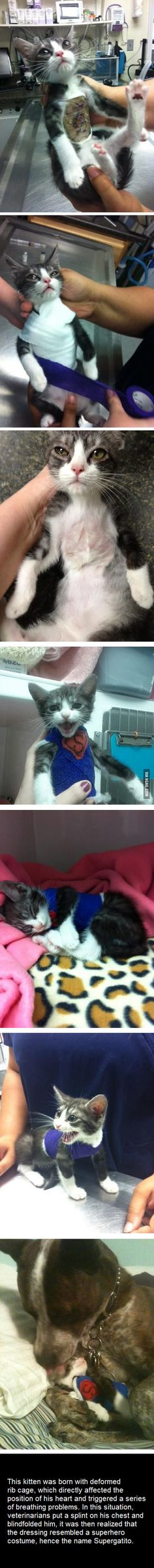 It's A Bird... It's A Plane... It's SuperGatito!