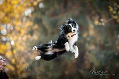 Jump! Dog Photography, Bald Eagle, Dogs, Animals, Animales, Animaux, Pet Dogs, Doggies, Animal