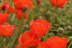 Recherche Plantes medicinales contres les refroidissements. Vues 8273.