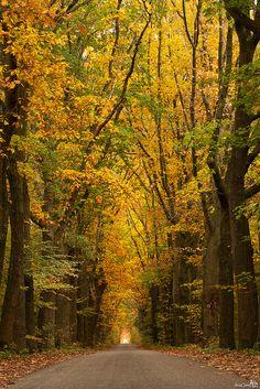 Autumn Road by BraCom (Bram), via Flickr
