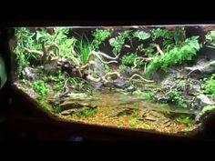 Paludarium - The Secret Garden - SZ --- Update 24.Tag - YouTube