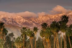 Palm Springs, California Although the sunshine and mid-century architecture of this desert hangout are always a constant, the retro Frank...