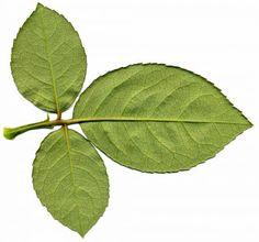 Leaves0126