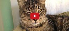10 Reasons to Adopt a Senior Cat!