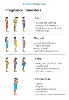Pregnancy usually has three trimesters, lasting about 40 weeks from the first day of a woman's last period. Each trimester comes with different symptoms. Learn more about each pregnancy trimester here. Pregnancy Chart, Pregnancy Timeline, Pregnancy Checklist, Pregnancy Guide, Trimesters Of Pregnancy, Pregnancy Stages, First Pregnancy, Pregnancy Workout, Pregnancy Trimester Chart