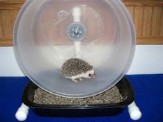 Carolina storm Wheel for hedgehogs. Easiest to clean. Safest. Quietest. Most durable.