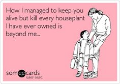 How I managed to keep you alive but kill every houseplant I have ever owned is beyond me...hahaha